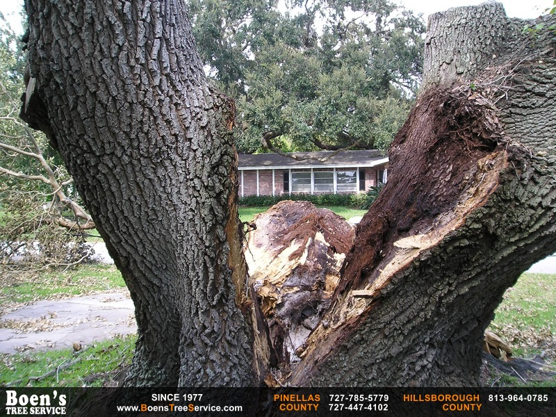 Boen's Tree Service - Tree information center