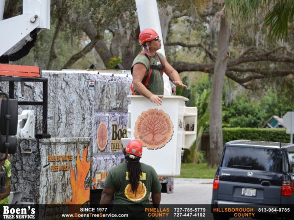 Tree Service Reviews Clearwater for Boen's Tree Service