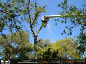 Tree Care in Clearwater, Fl